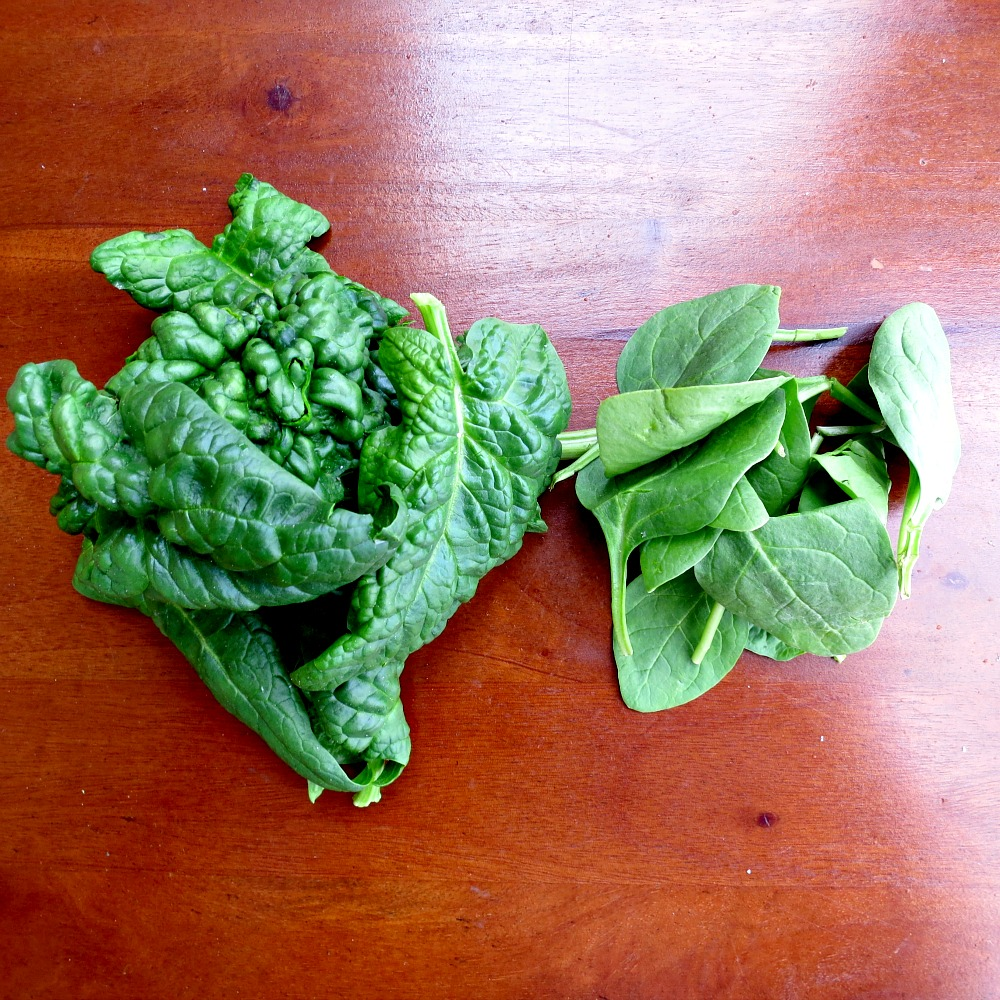 Fresh Local Spinach versus Grocery Store Spinach
