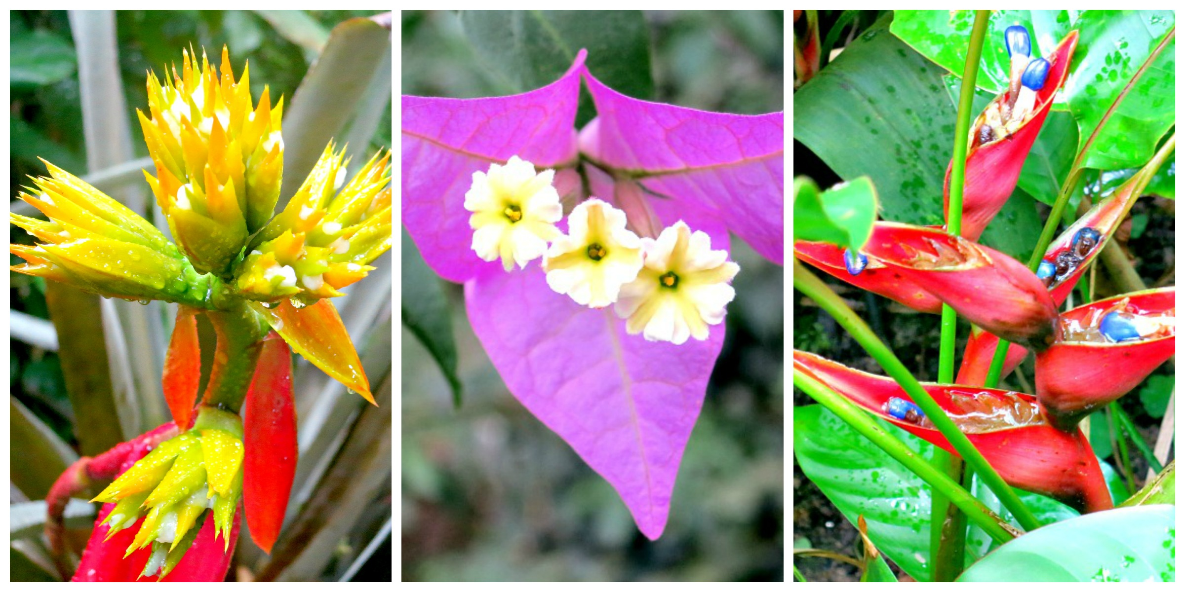 Botanical Garden Flowers Collage