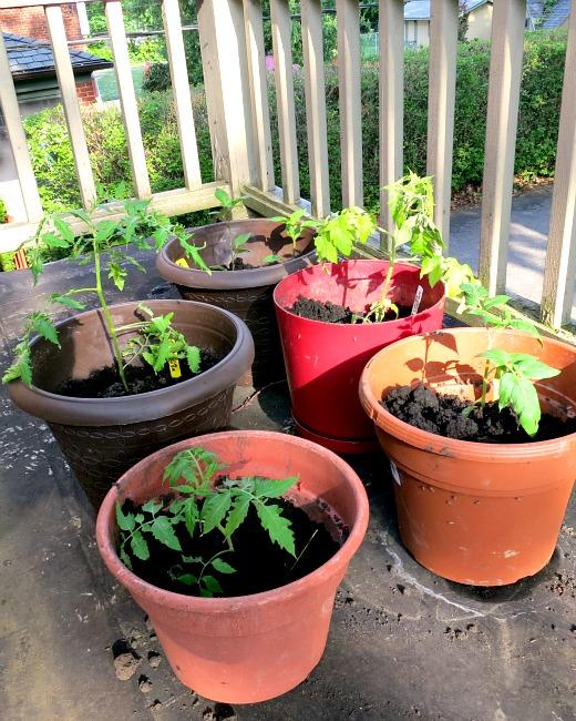 Pot Garden