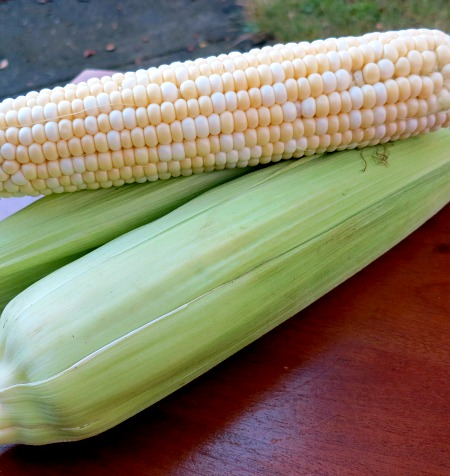CSA Summer 2013 Corn