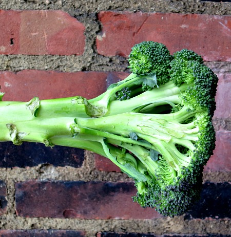 Broccoli Stalk
