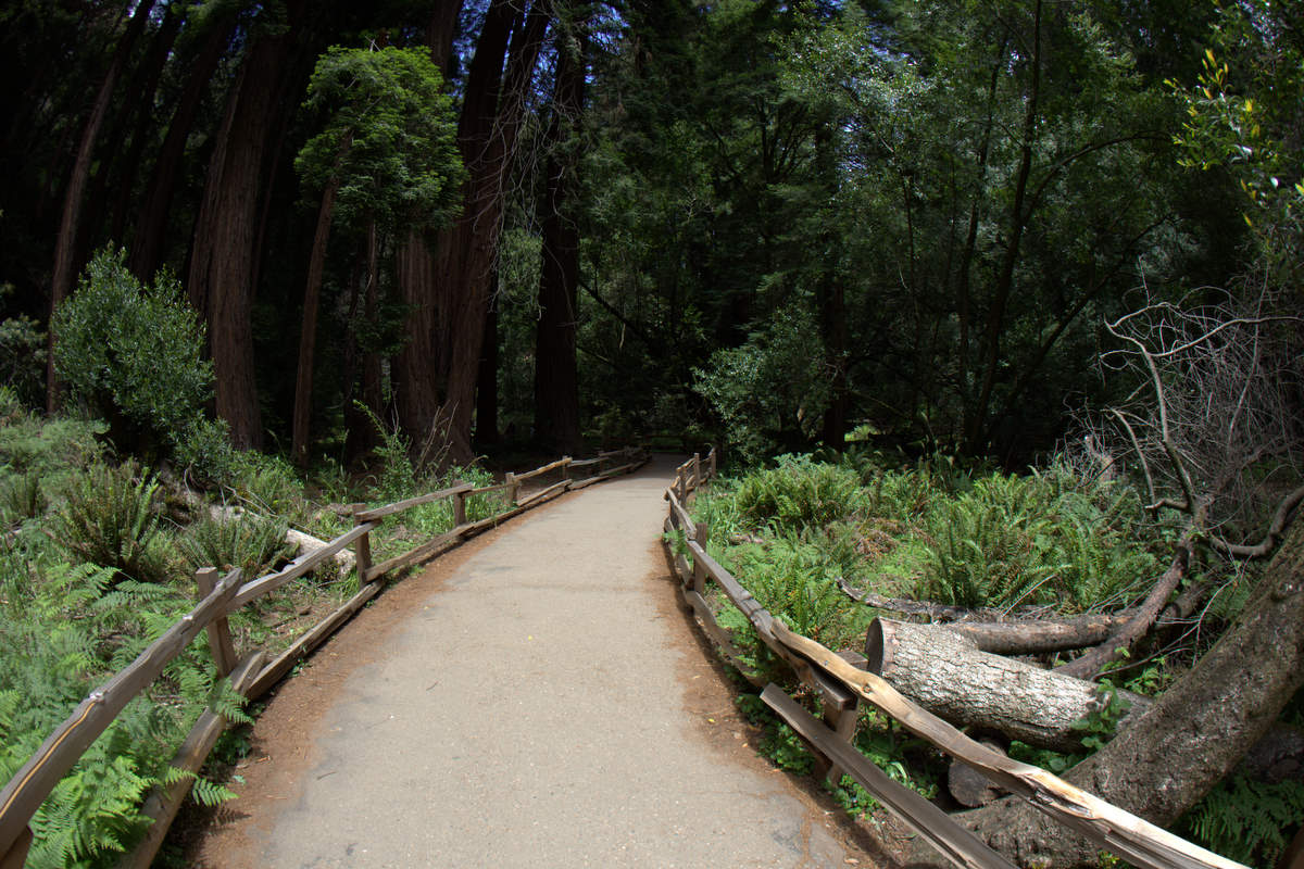 Muir-Woods-Walking-Path-4