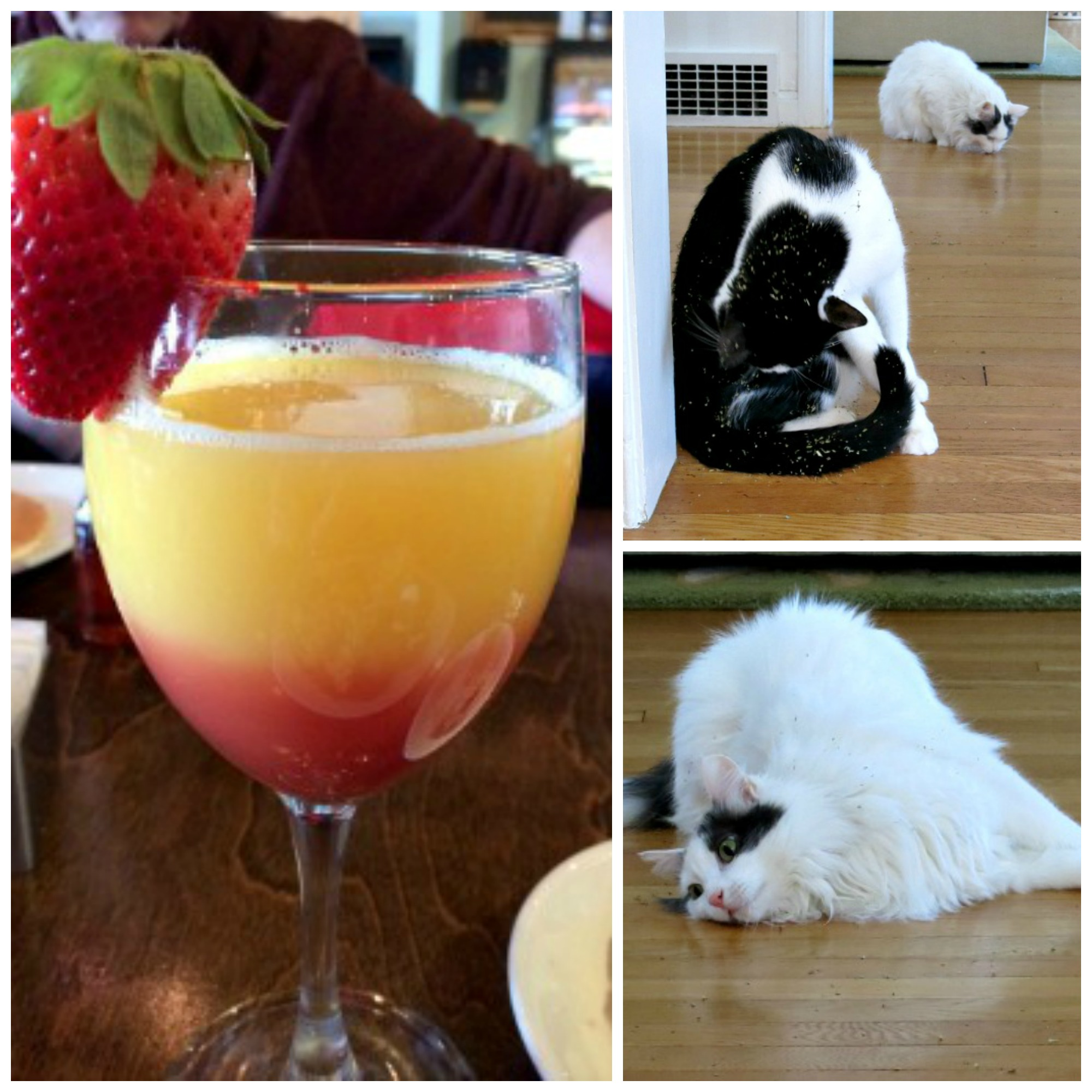 Mimosas and Cat Nip Collage