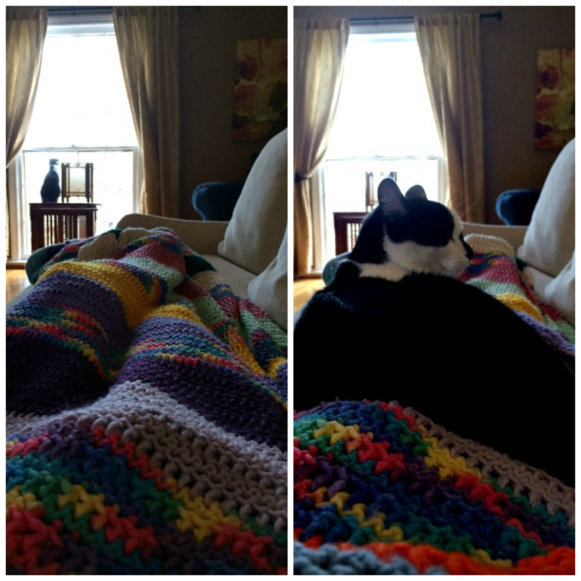Afternoon Naps Collage