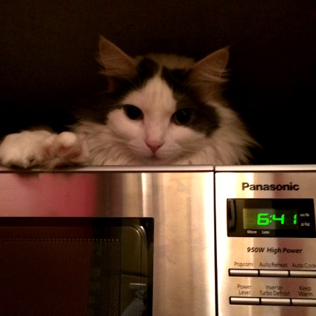 Sam on the Microwave