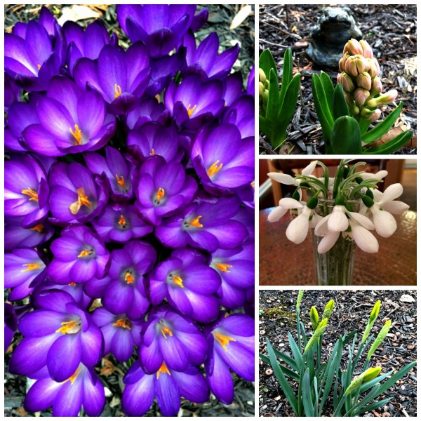 Spring Flower Collage