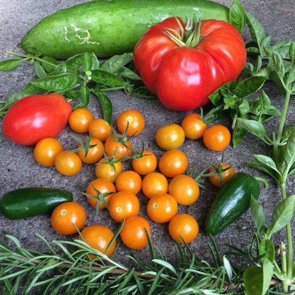 Garden Harvest