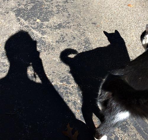 Oscar and Meg Shadows