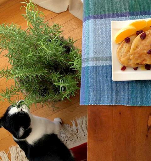 Oscar Smelling the Rosemary 2