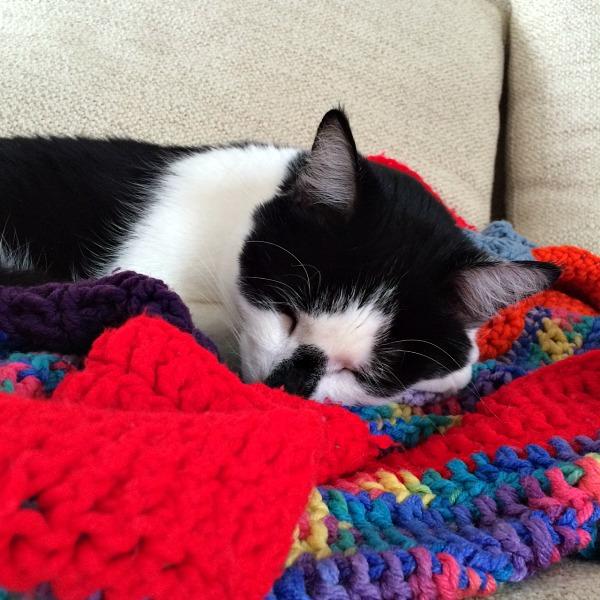 Oscar Sleeping