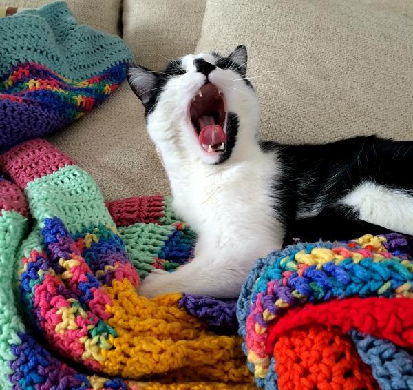 Oscar Yawning or Roaring