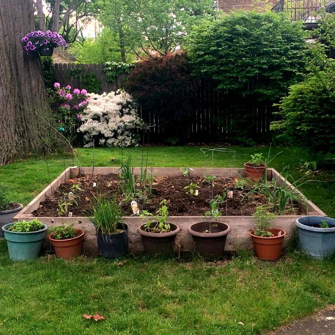 2015 Rasied Garden Bed