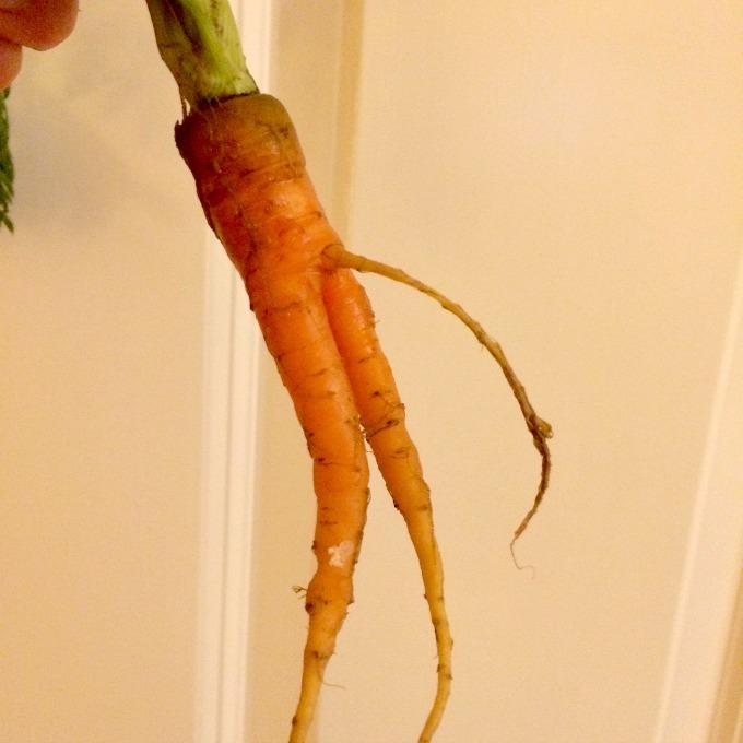 Naughty Carrot