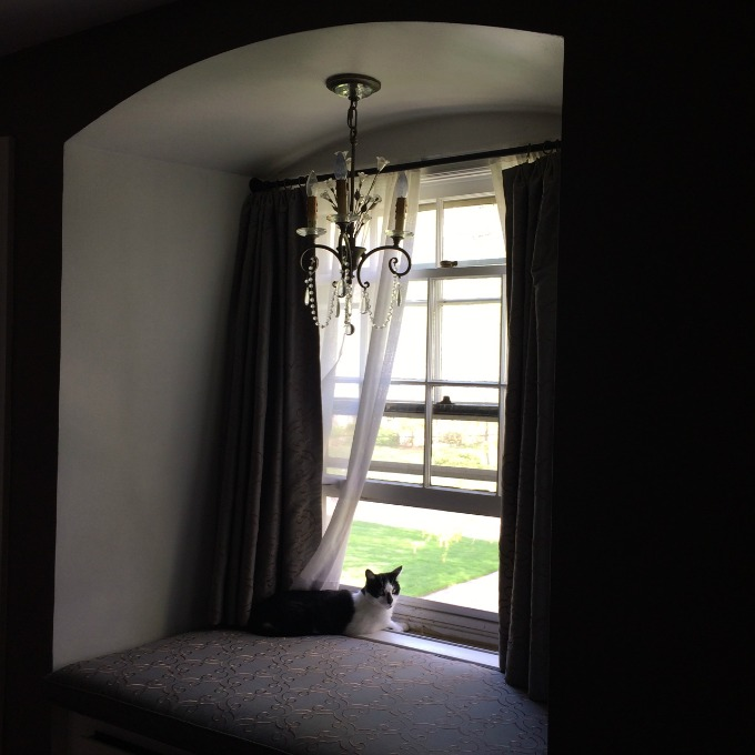 Oscar in the Bedroom Window