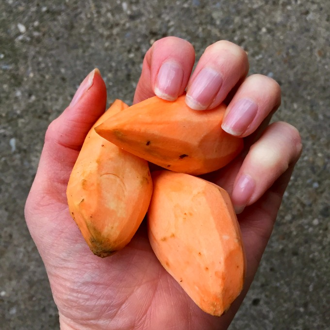 Palm Sized Sweet Potatoes