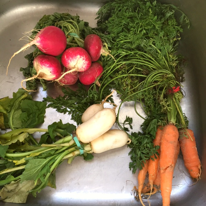 Radishes, Turnips and Carrots