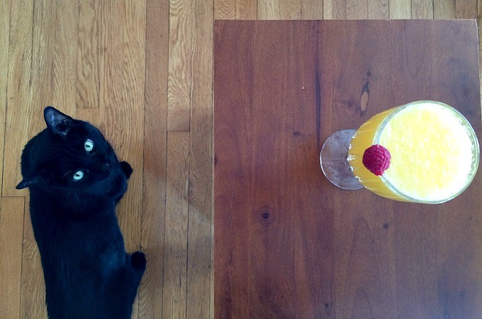 Max and the Mimosa