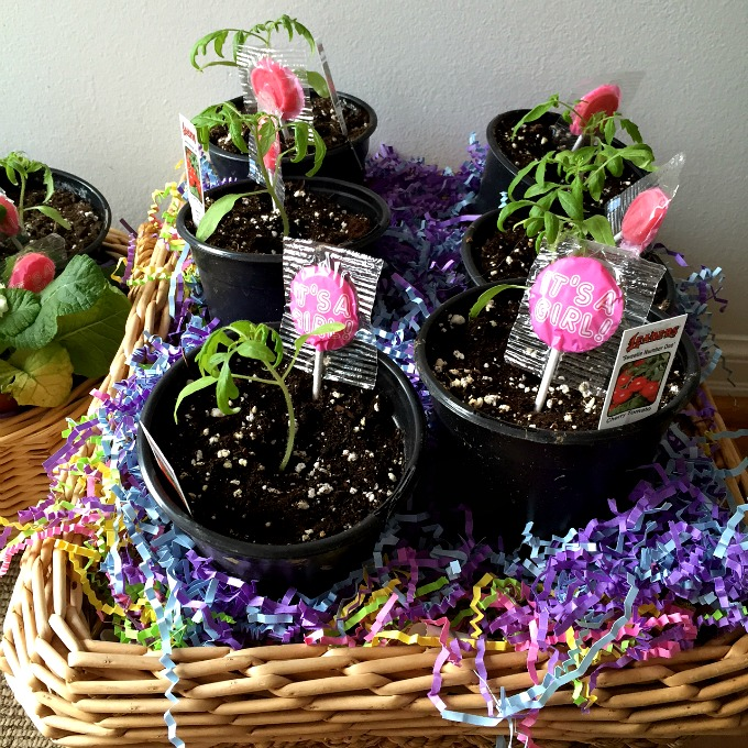 Baby Shower Gifts - Tomato Plants