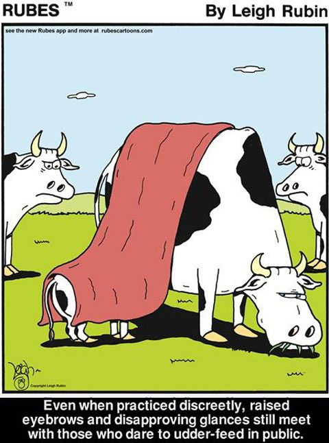 Breastfeeding Funny - Cows
