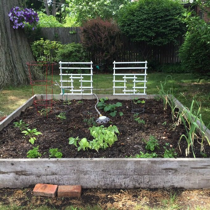 Vegetable and Hern Garden 2016