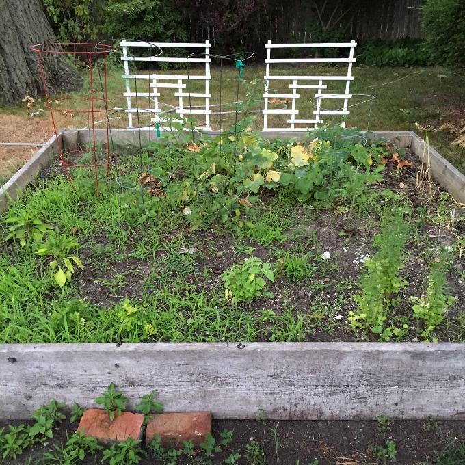 Veggie Garden Full of Weeds