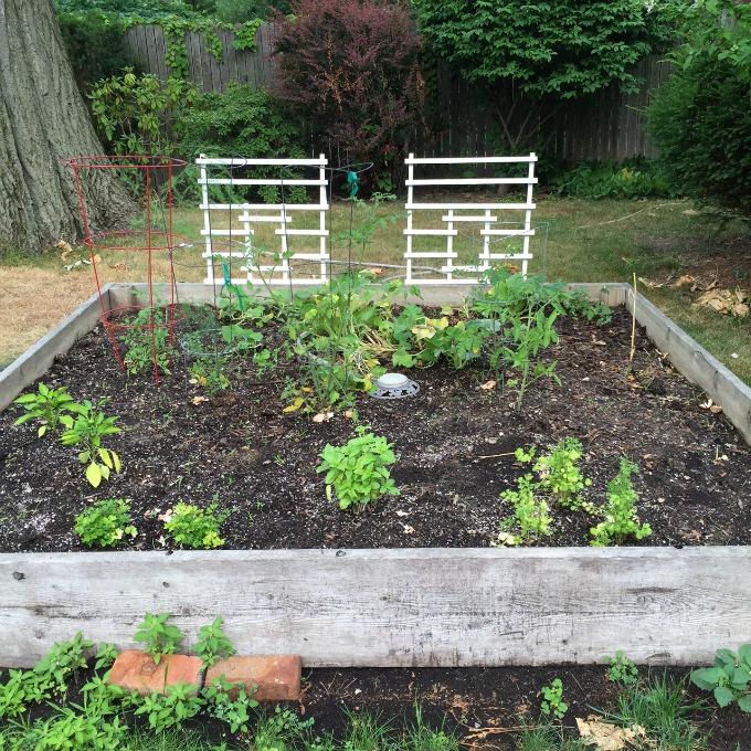 Veggie Garden Post Weeding